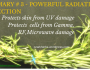 Rosemary #3 – Powerful Protection from Radiation
